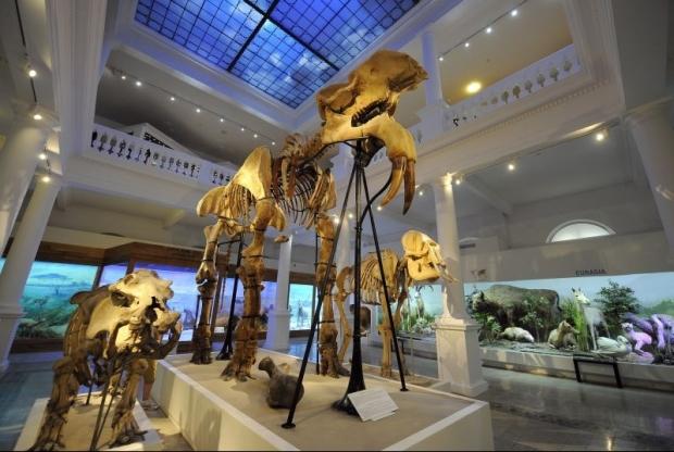 antipa_muzeu